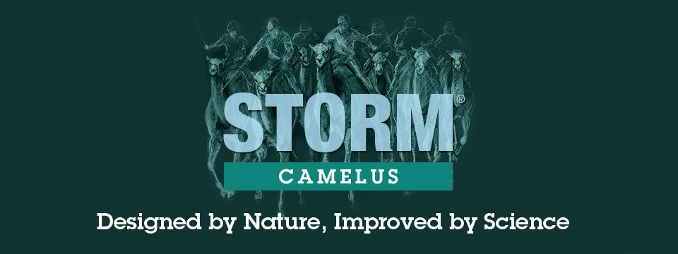 camelus_headerimage_master