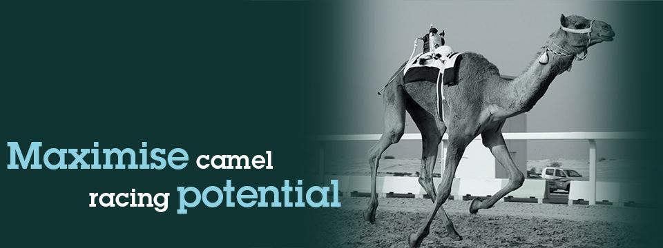 camelus_headerimage_maximise