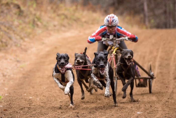 Silver for STORM Canis Advocates