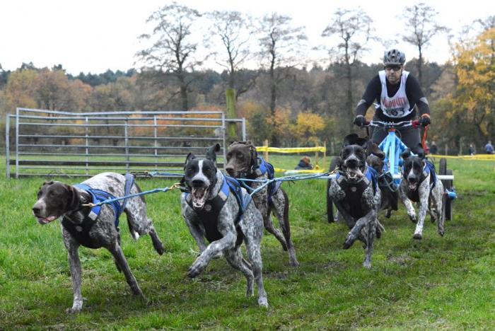Sled dog racing Gunter de Backer